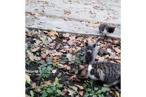Кошенята, які ловлять мишей