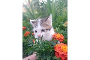 Котята, 1.5 месяца в добрые руки