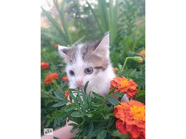 Котята, 1.5 месяца в добрые руки - объявление о продаже  в Харькове