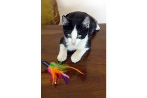 Котик ищет любящий дом!