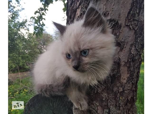 бу Гарні кошенята в Києві