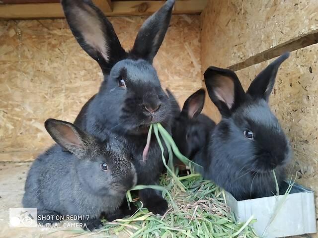 Кролики 1'5-2 месяца- объявление о продаже  в Харькове