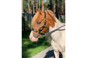Купить Недоуздок Для Пони / Лошадь /осел