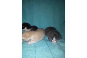 Милые крошечки котята. Девочка и два мальчика