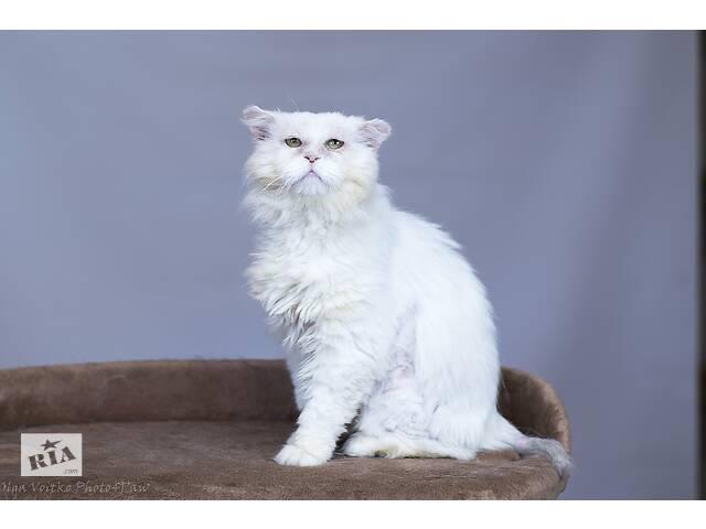 Отдам в хорошие руки котика Кефира.- объявление о продаже  в Киеве