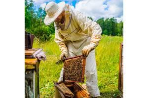 Пчелопакеты карпатки с доставкой