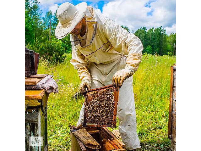 продам Пчелопакеты карпатки с доставкой бу в Золочеве