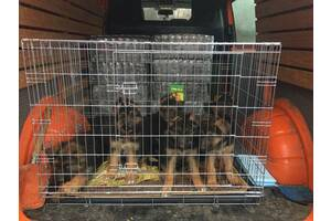 Переноска, домик, вольер, клетка для собак №6, 109х72х79h Италия croci
