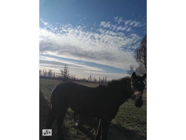 продам Продам кобилу бу в Житомире