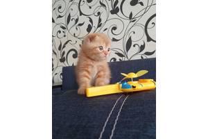 Продам котёнока