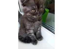 Продам котиків