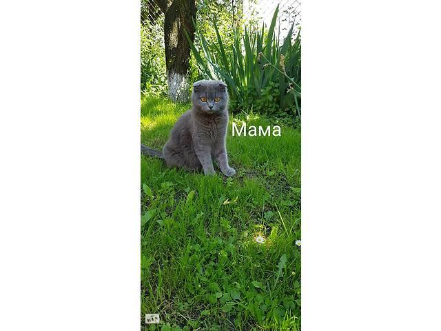 продам Продам красивых котят бу  в Украине