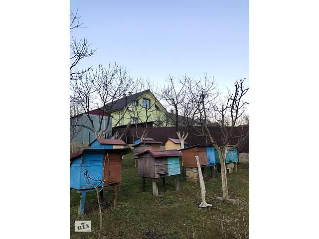 купить бу Продам пасіку  в Украине