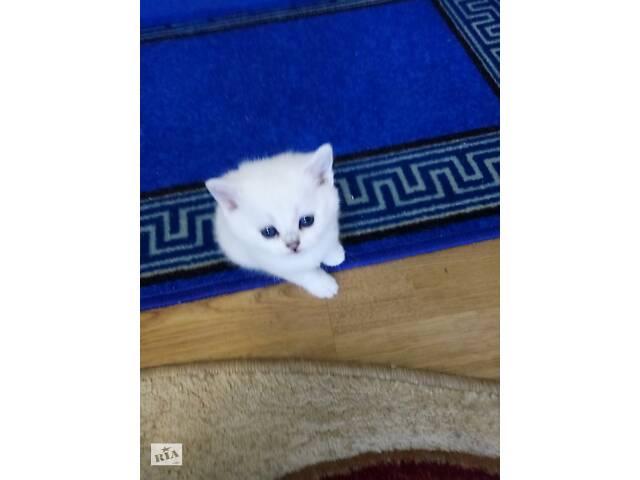 продам Продам породистых котят бу в Тернополе