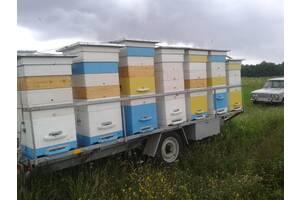 Продам причеп для перевезення вуликів та вулики з бджолиними сім'ями