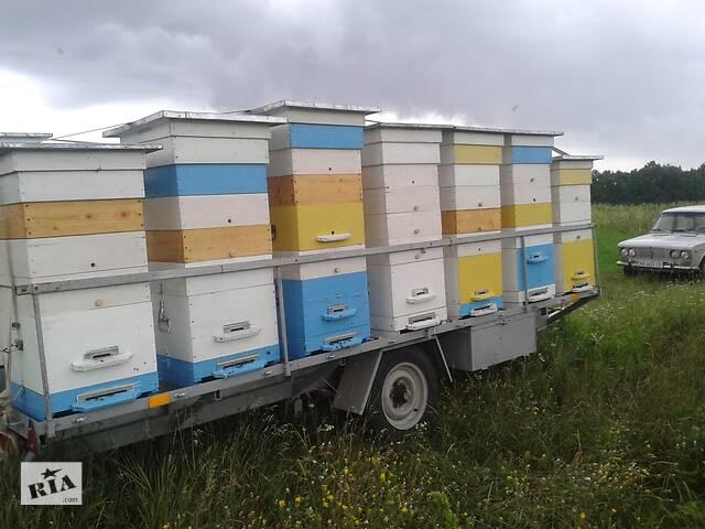 продам Продам причеп для перевезення вуликів та вулики з бджолиними сім'ями  бу в Вінниці