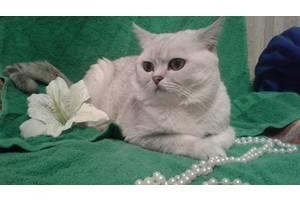 Продам шикарного кота-производителя