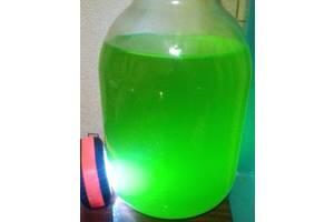 Продам тетраселмис (фитопланктон)