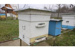 Продам вулики разом з бджолиними сім'ями
