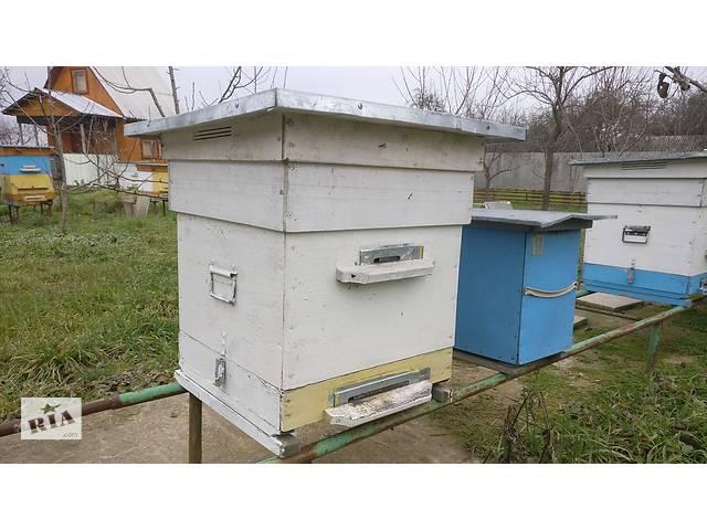бу Продам вулики разом з бджолиними сім'ями  в Виннице