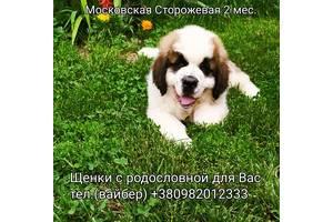 Щенки Московская Сторожевая 2,5 мес.Документы.Доставка