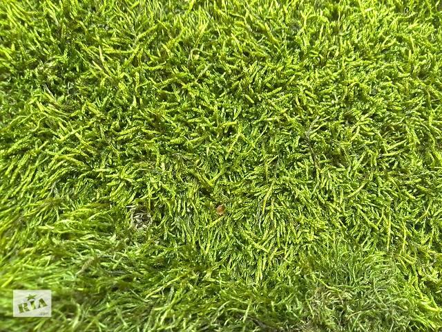 бу Тонкий мох для равликів Ахатин, підстилка для тераріуму, для флористики, для декору в Черкасах