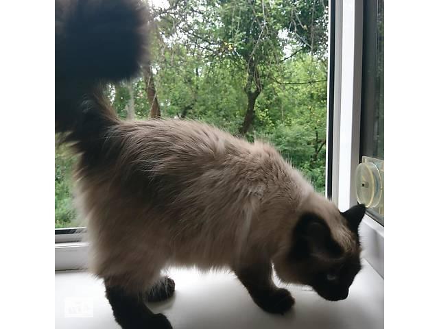продам Віддам в добрі руки кішку тайської породи. бу  в Украине