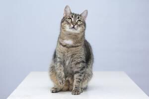 Віддам в добрі руки молодого котика Тиграна.
