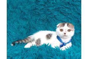 Вислоухий белый котёнок
