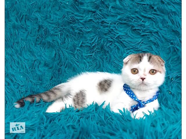 продам Вислоухий белый котёнок  бу в Днепре (Днепропетровск)