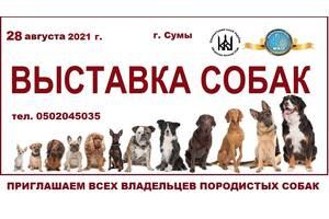Запишитесь на выставку собак
