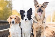 Другие породы собак