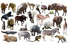 Другие животные