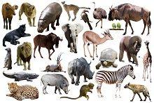Тварини (Загальне)