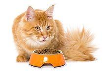 Корм и лакомства для кошек, котов и котят