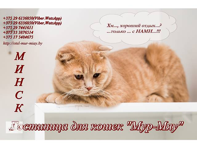 бу Мур-Мяу - зоогостиница для кошек, Минск  в Украине