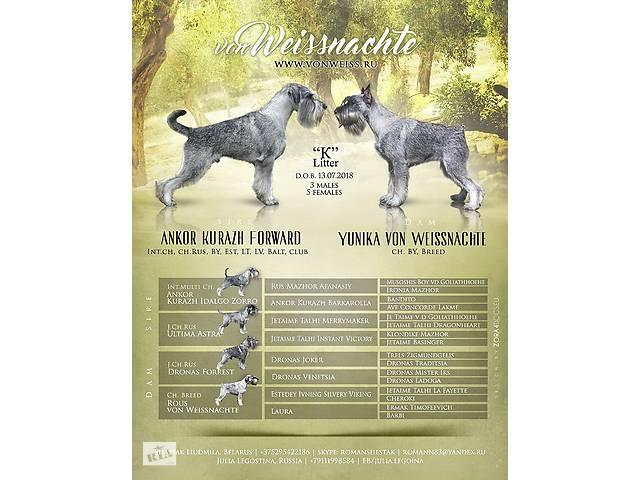 миттельшнауцера щенки- объявление о продаже   в Украине