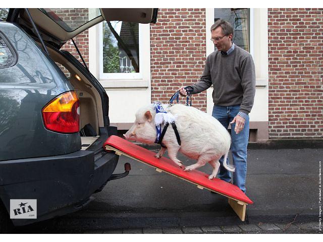 продам Перевозка скота онлайн бу